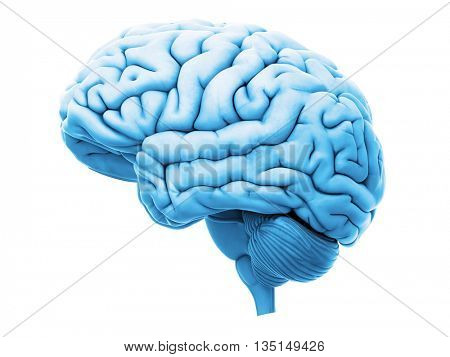 3d rendered, medically accurate 3d illustration of the human brain