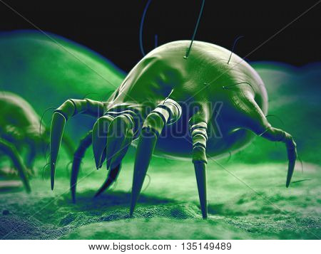 3d rendered, medically accurate 3d illustration of the dust mite