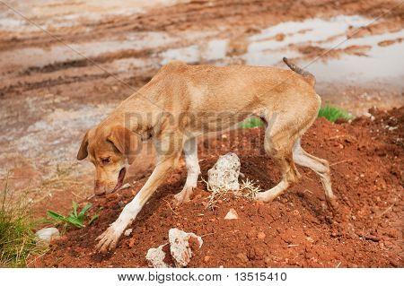 Greek Stray Dog