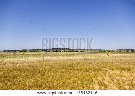 heath landscape at Hiddensee island in summer