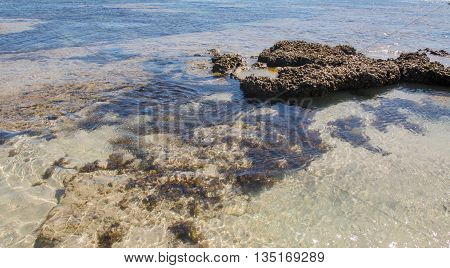 Closeup of the fringe beach reef in the clear Indian Ocean waters at the Blue Holes beach in Kalbarri, Western Australia.