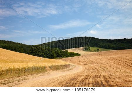 agriculture summer landscape in front of clouded blue sky