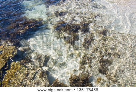 Closeup of the beach reef in the clear Indian Ocean waters at the remote Blue Holes beach in Kalbarri, Western Australia.