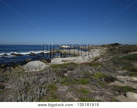 This is an image of the coast at Asilomar State Preserve under clear blue sky.