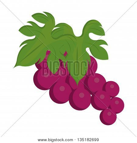 purple bunch of gapes front view over isolated background, vector illustration