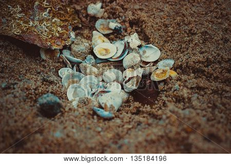Seashells taken by the sea. during the break of dawn