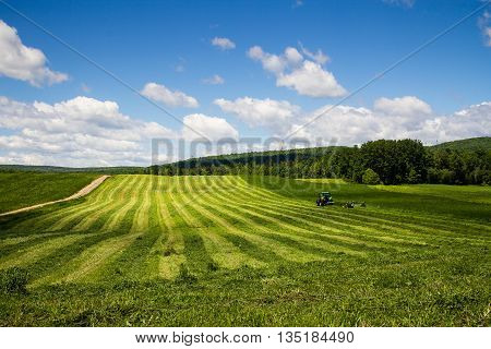 freshly cut hay row field drying landscape