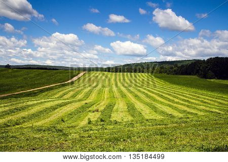 freshly cut hay row field drying landscape