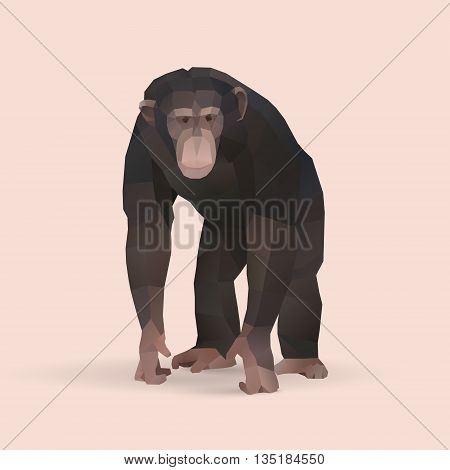 chimpanzee polygonal geometric animal illustration, low poly vector