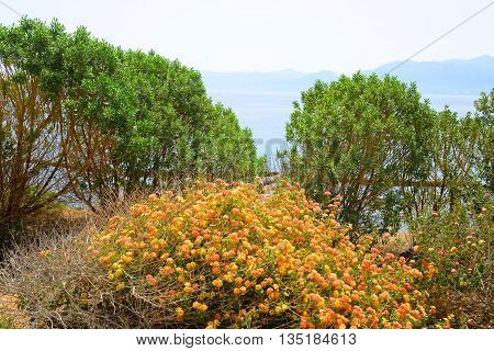 Trees on the shore of the Crete Sea by sunny day Greece.