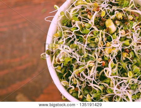 Microgreens assortment in paper cup. Healthy Green Salad with fresh raw sprouts.