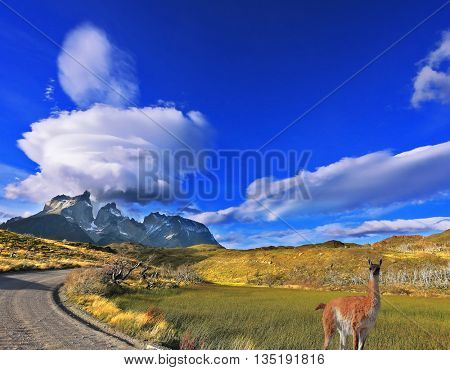 National Park Torres del Paine in southern Chile. A dirt road leads to the distant mountains. A huge cloud in the form of a burning candle flies away. At the roadside posing graceful guanaco