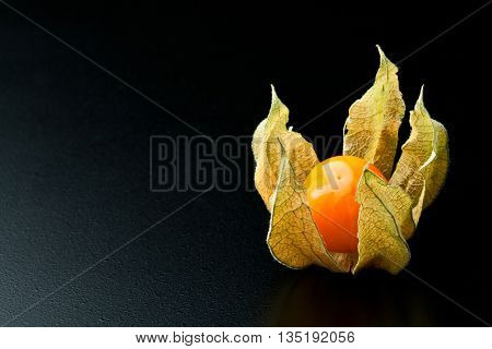 detail of alkekengi fruit background