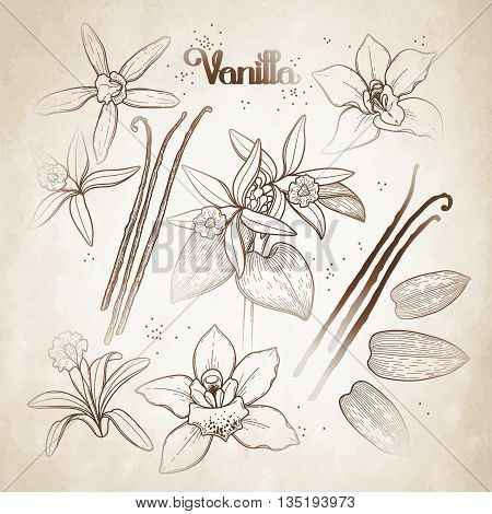 Graphic vanilla flowers collection isolated on aged paper. Vector floral design elements
