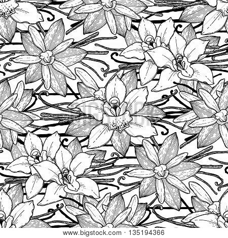 Graphic vanilla flowers. Vector floral seamless pattern. Coloring book page design for adults and kids