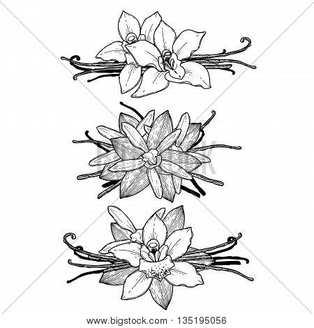 Graphic vanilla flowers collection isolated on white background. Vector floral vignettes. Coloring book page design for adults and kids
