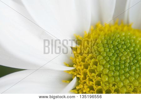 Close up of a white flower in macro mode