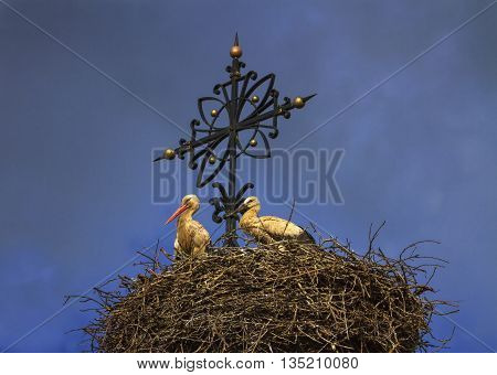 Two european white storks one fledgling and one adult ciconia standing in the nest next to a cross at the top of a church by day