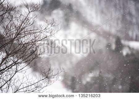 Snow Falling With Tree Background