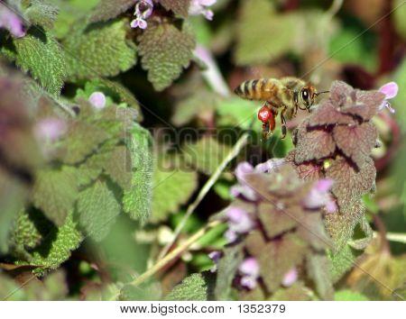 Beelookingforspring