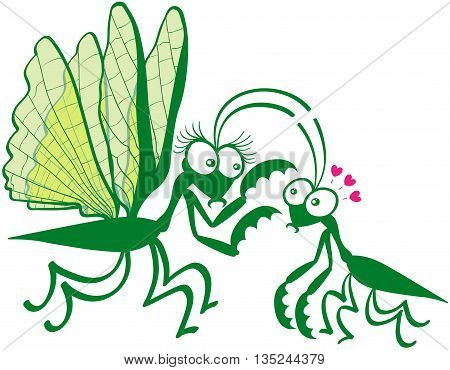 Funny couple of praying mantises showing a big female while hypnotizing its mate by attracting its attention to its spiny front legs. The tiny male looks fascinated and shows big eyes and red hearts