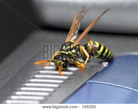 Wasp On Laptop