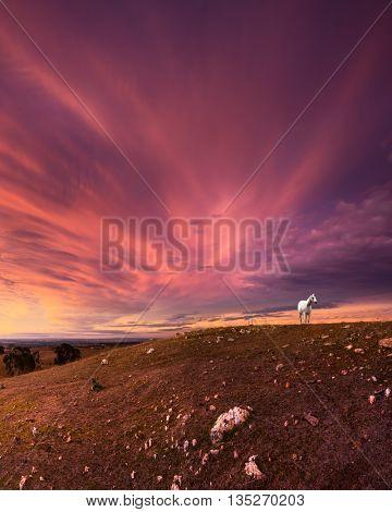 White horse overlooks a stunning sunset