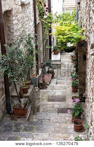 Quaint deserted narrow little stone paved street or lane between houses lined with flower pots in a town