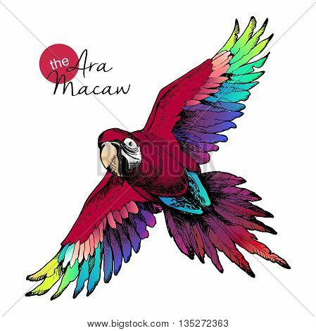 Vector hand drawn illustration of ara macaw parrot. Engraved exotic bird collection with high vibrant colors. Wild animals portrait.