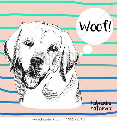 Vector close up portrait of labrador retriever. Hand drawn domestic pet dog illustration. Isolated on peach background with cerulean strips.