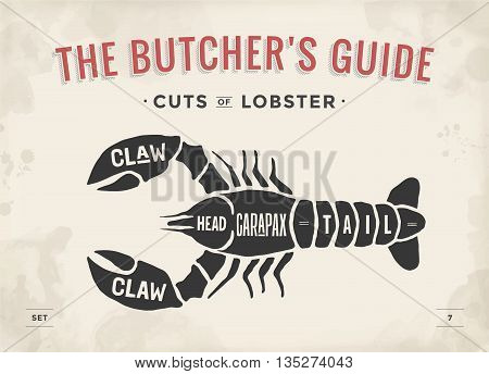 Cut of meat set. Poster Butcher diagram and scheme - Lobster. Vintage typographic hand-drawn visual guide for butcher shop. Vector illustration