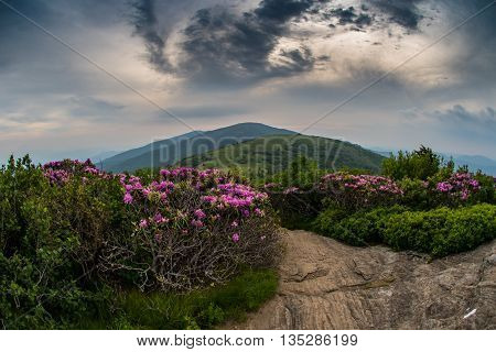 Swirling Clouds Over Jane Bald with Rhododendron as sunset light begins to creep into the sky