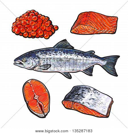 sea fish salmon with caviar and fillets, vector sketch hand-drawn illustration isolated on white background, fresh sea fish salmon, seafood salmon, red caviar, a set of seafood with fresh food food