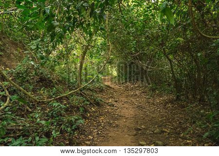Route into the deep forest for trekking in Thailand. Suitable for use as wallpapers.