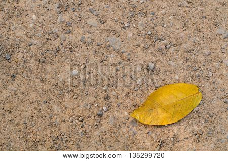 Yellow leaf fall on the gravel floor. Abstract Background. Suitable for use background and place text over photo.