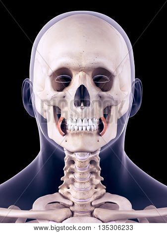 3d rendered, medically accurate illustration of the face buccinator