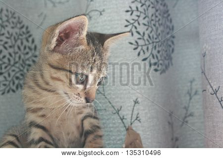 Adorable funny Cute Kitten cat face standing looking curiously. finding waiting for something outside.