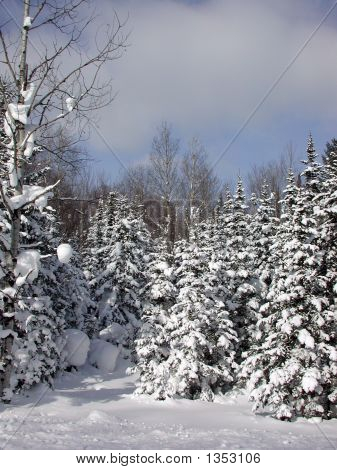 Upper Michigan Winter