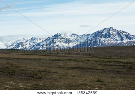 Snowcapped mountains rise above fields in Alaska's Denali National Park