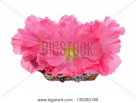 Beautiful decorating hollyhock flowers /Althaea officinalis/ in basket isolated white background