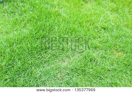 Closeup shot on green grass, nature background