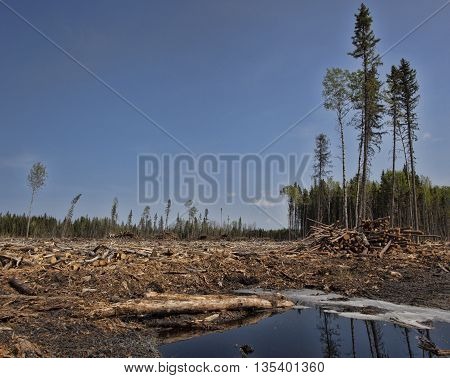 Clear cut forest with mud and water in Saskatchewan Canada