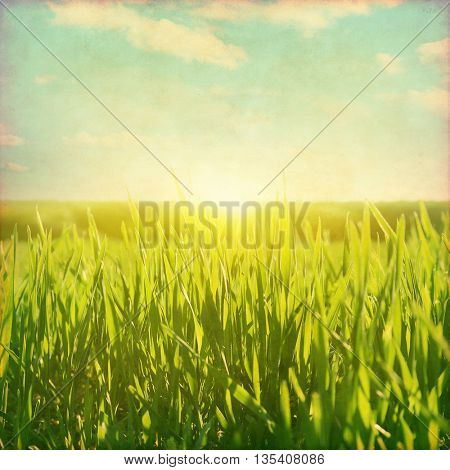Sunset over green grass field. Grunge photo.