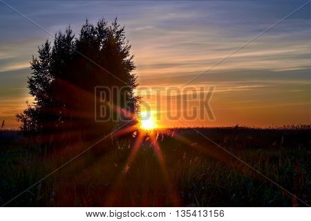 Sunset with sunbeams. Forest field and tree.