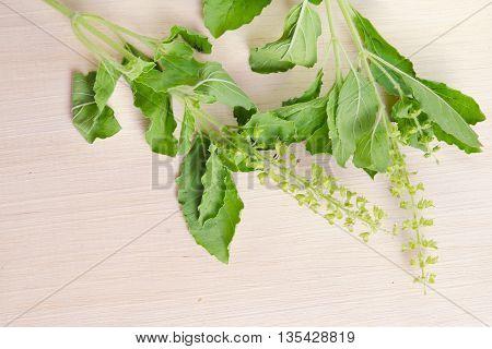 Basil leaf herb (Other names are Ocimum basilicum great basil Saint-Joseph's-wort Basil Lamiaceae thyrsiflora lemon basil citriodorum holy basil Ocimum tenuiflorum)