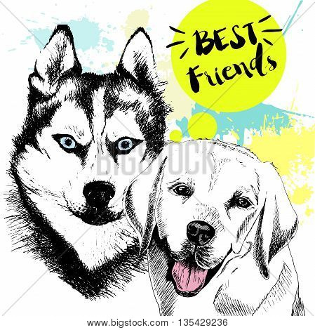 Vector hand drawn concept of labradoe retriever and siberian husky frienship. Color hand drawn domestic dog illustration. Decorated with blue blots. Best friends.