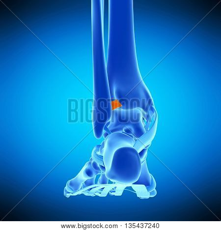 3d rendered, medically accurate illustration of the anterior tibiofibular ligament