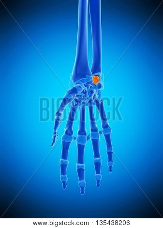 3d rendered, medically accurate illustration of the palmar ulnolunate ligament