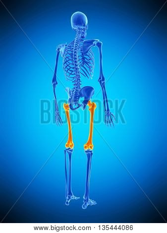 3d rendered, medically accurate illustration of the femur