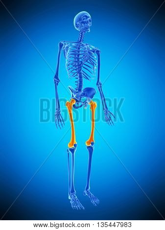 3d rendered, medically accurate illustration of the skeletal upper legs